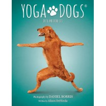 Yoga Dogs kort