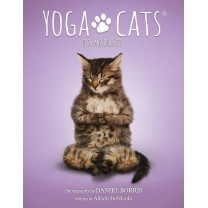 Yoga Cats kort