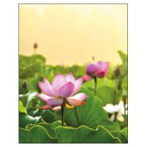Notesbog med Lotusblomst