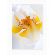 Orchids art print - 7080