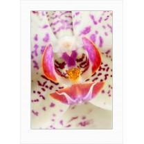 Orchids art print - 7147
