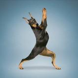 Inspiration til din yoga